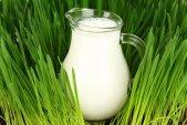 Как правильно вскипятить молоко в мультиварке